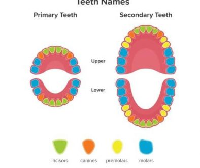 teeth-job-inforgraphics-adentaloffice